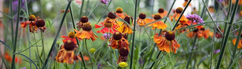 Opvullen van tuin met beplanting