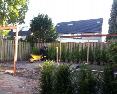 Beplanting in Den Bosch