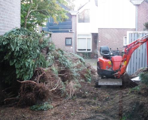 Bomen verwijderen - tuinaanleg Rosmalen