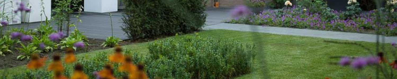 Planten en zaaien in augustus