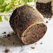 Volle grond planten najaar