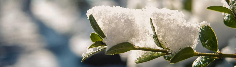 Tuinonderhoud in de winter