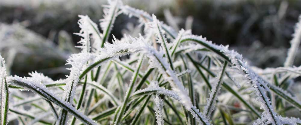 Voordelen tuinaanleg winter